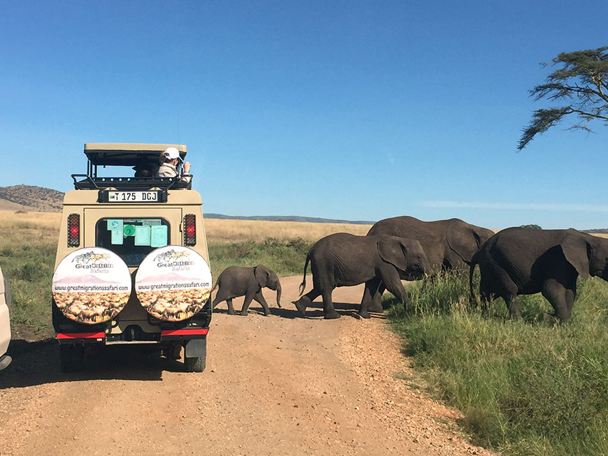 Great Migration Safaris